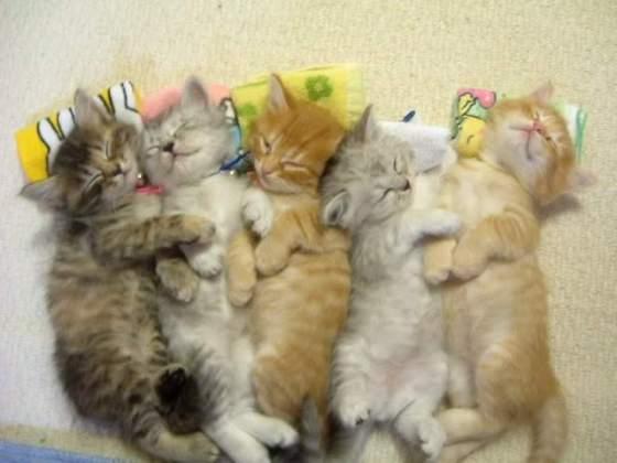 baby-kittens